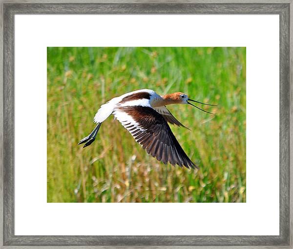 Noisy Bird Framed Print