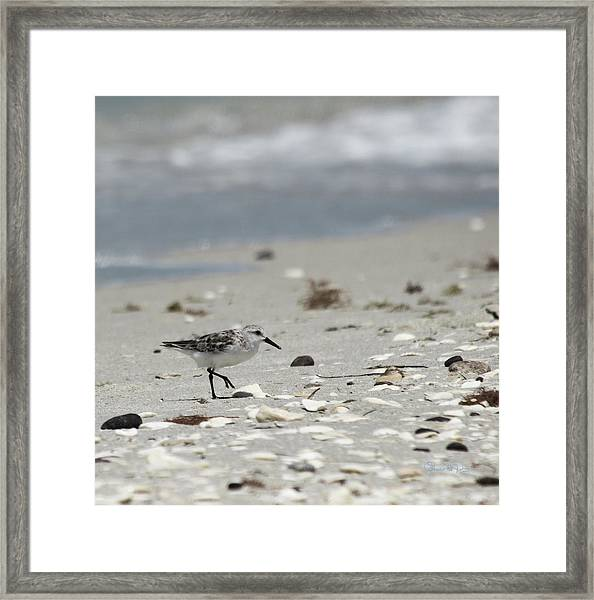 Nokomis Beach Piper Framed Print