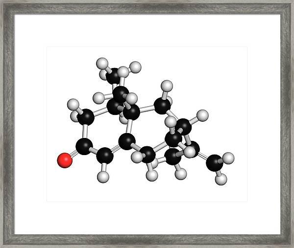 Nootkatone Insect Repellent Framed Print