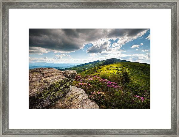 North Carolina Blue Ridge Mountains Roan Rhododendron Flowers Nc Framed Print