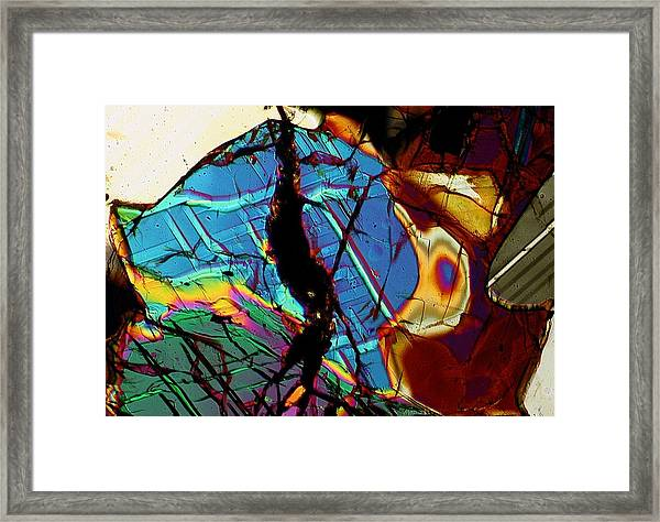 Rock Tortoise Framed Print