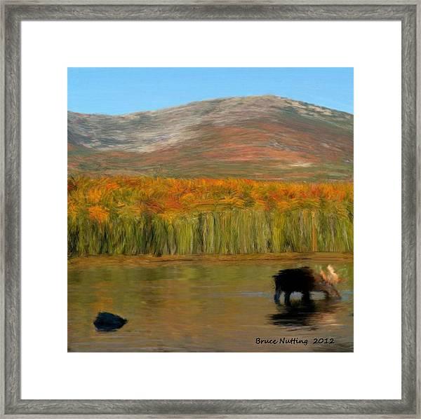 Northwest Moose Framed Print
