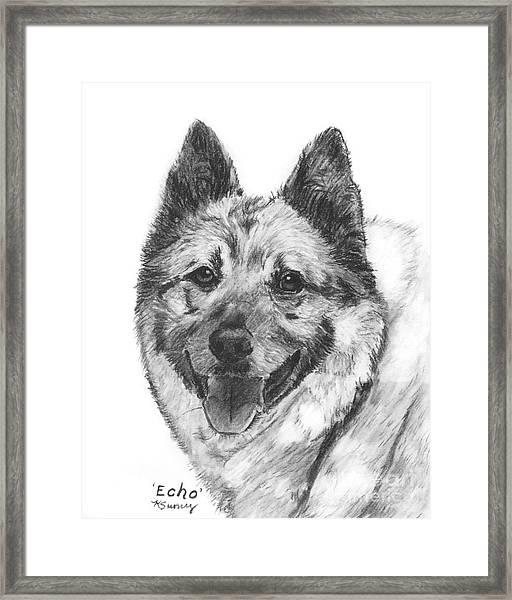 Norwegian Elkhound Sketch Framed Print