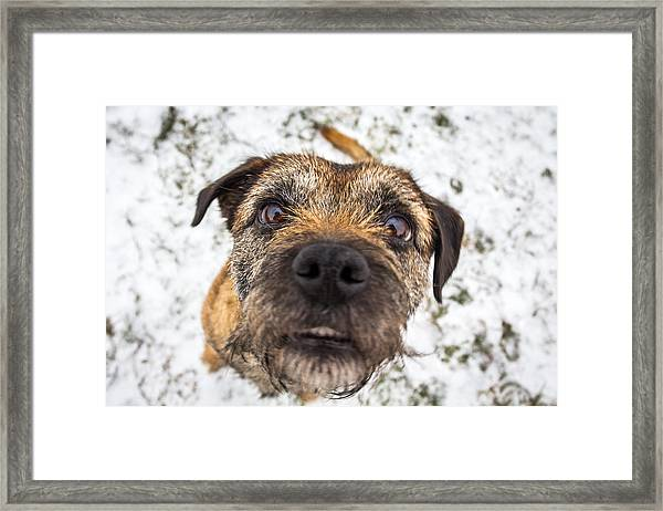 Nosey Dog. Framed Print