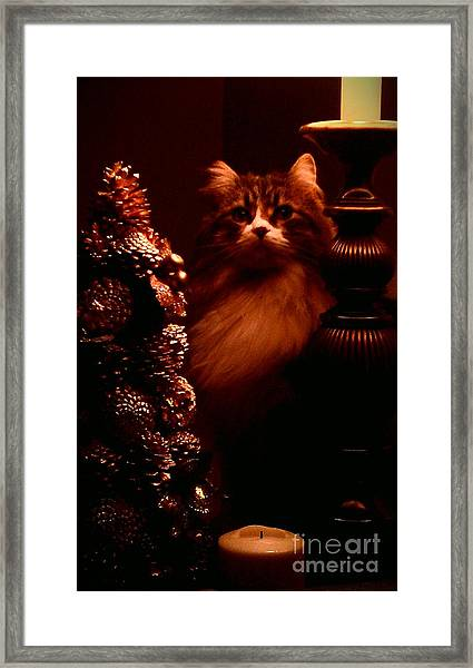 Not A Creature Was Stirring... Framed Print