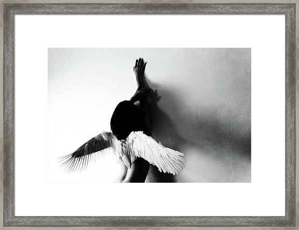 Not Fly Framed Print