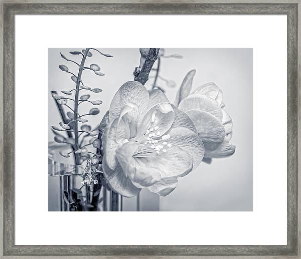 Not Quite Black And White Framed Print