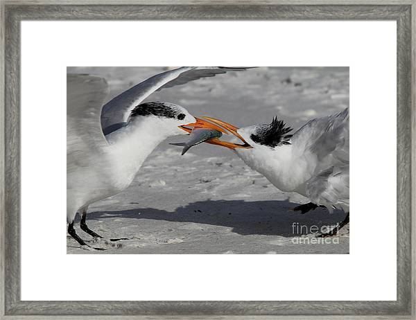 Nothing Says I Love You Like A Fish Framed Print