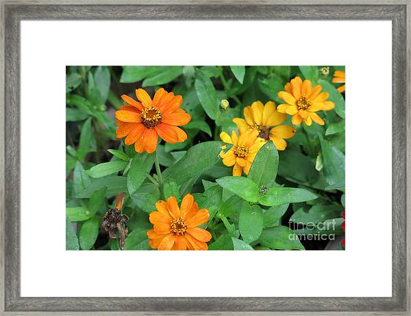 Nothing's Perfect Framed Print