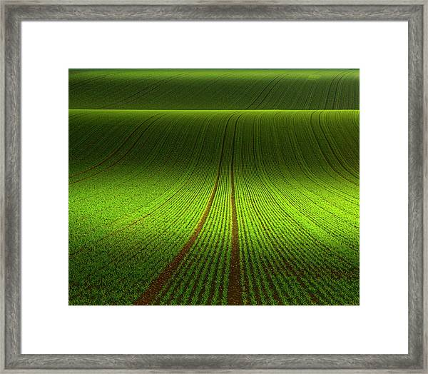 November Green Framed Print