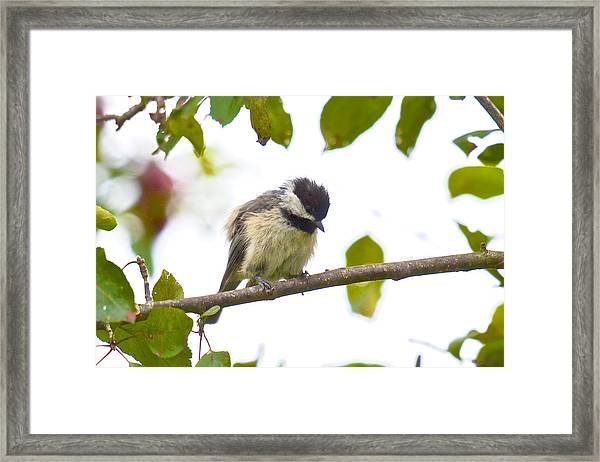 Now What Am I Supposed To Do Framed Print