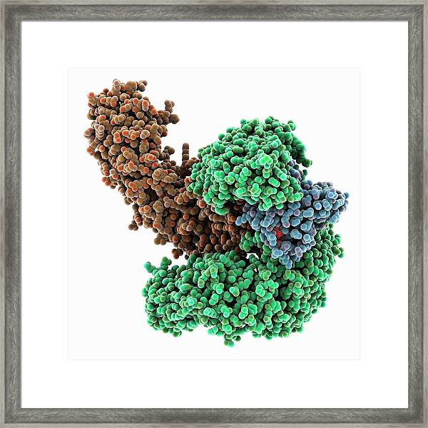 Nuclear Transport Complex Molecule Framed Print