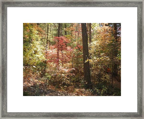 Oak Creek Arizona Fall Foliage Framed Print