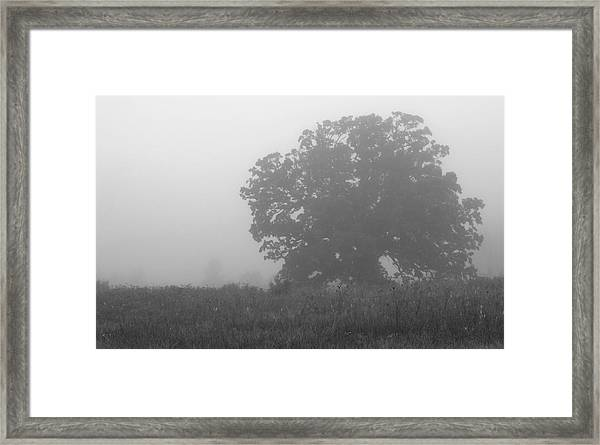 Oak In The Fog Framed Print