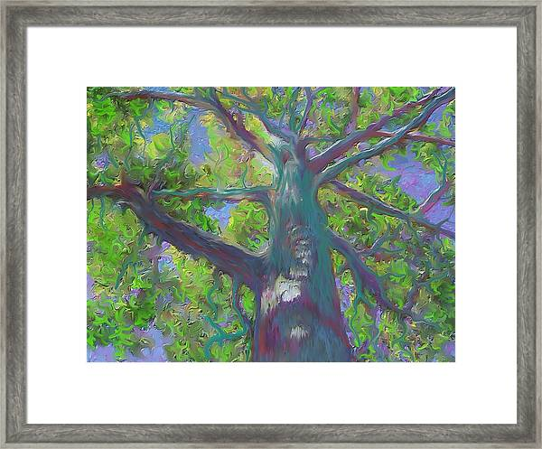 Oak Tree 1 Framed Print