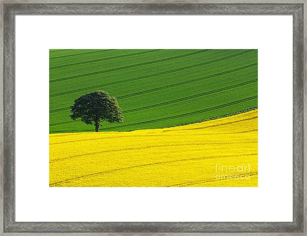 Oak Tree Split Framed Print