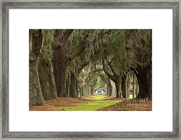 Oaks Of The Golden Isles Framed Print