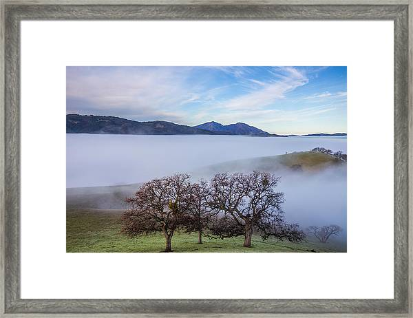 Oaks On A Hill And Mt. Diablo Framed Print