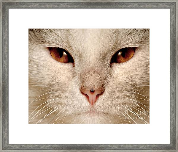 Obi The Cat Framed Print