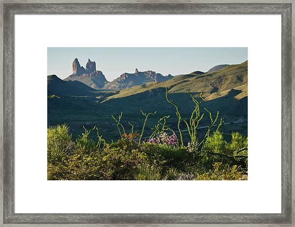 Ocotillo(fouqurieria Splendens Framed Print