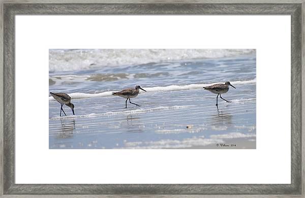 Ocracoke Shorebirds Framed Print