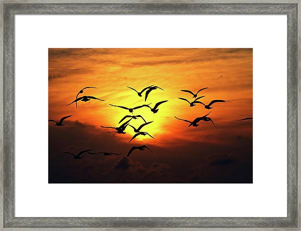 Ode To Birds Framed Print