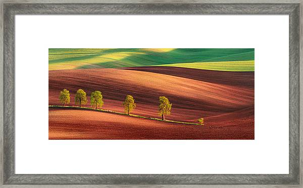 Odyssey Of An Avenue II Framed Print by Jan ?m?d, Qep