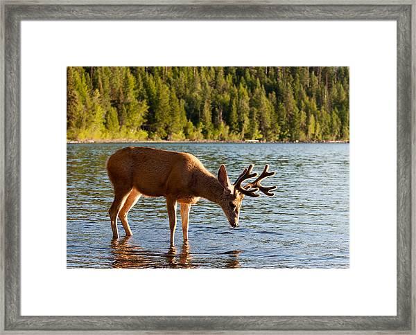 Oh Deer Is That Me Framed Print