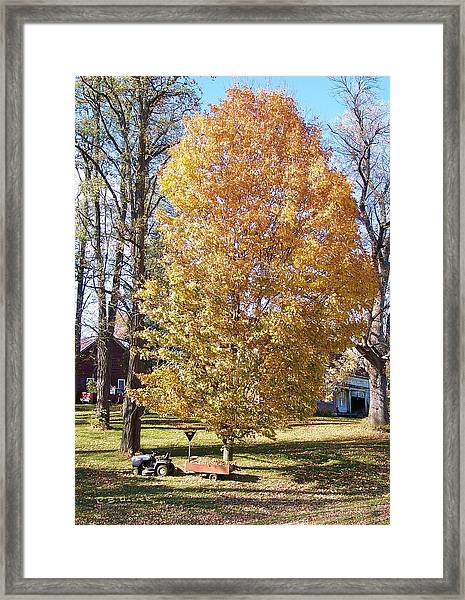 Oh Lord Thy Tree Is So Tall And My Cart Is So Small... Framed Print