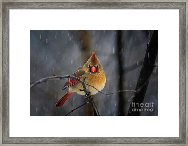 Framed Print featuring the photograph Oh No Not Again by Lois Bryan