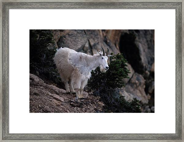 Okanogan National Forest Framed Print