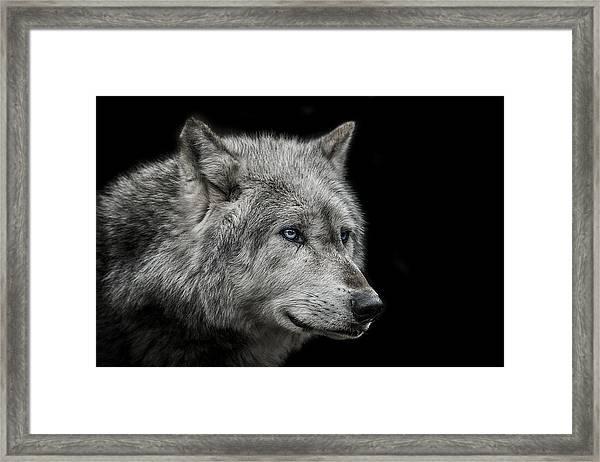Old Blue Eyes Framed Print