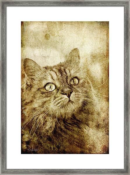 Old Fashion Cat Framed Print