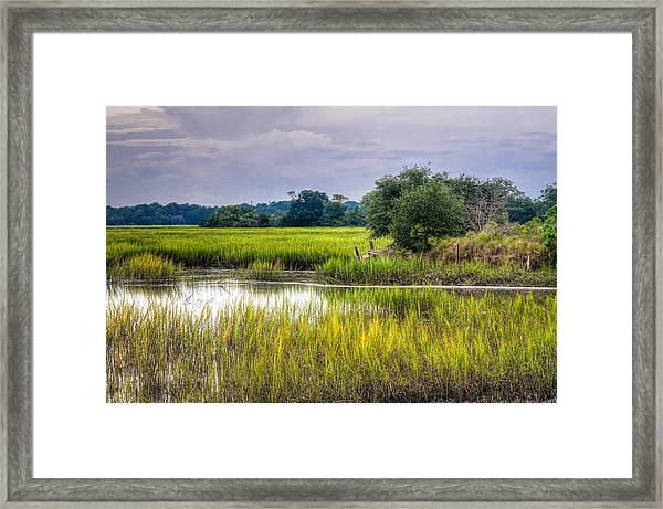 Old Fence Line At The Whale Branch Framed Print