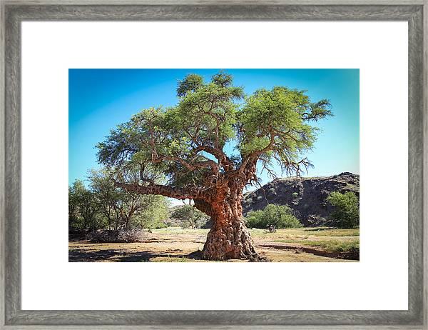 Old Gnarled Tree Framed Print