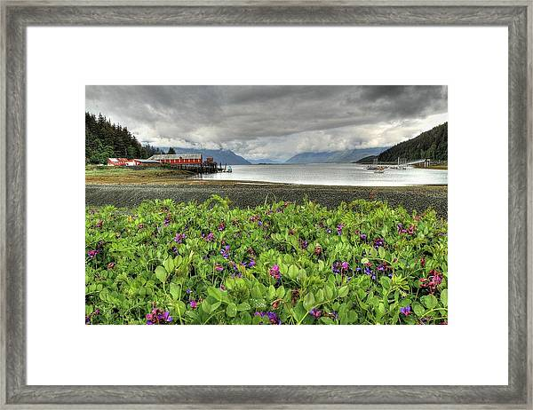 Old Haines Cannery Framed Print