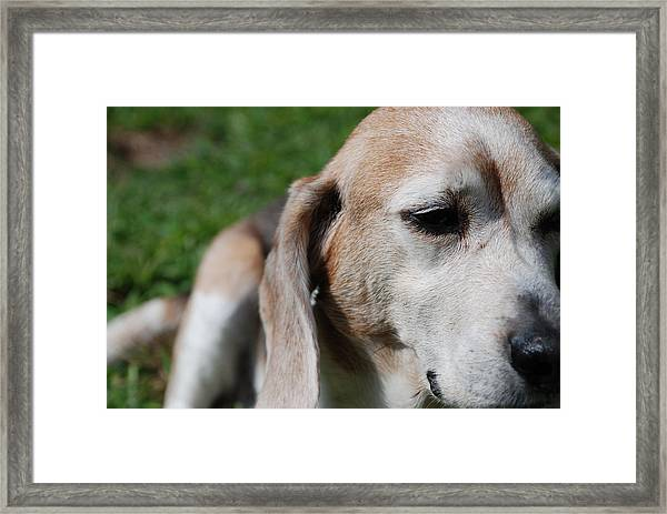 Old Is Beautiful Framed Print