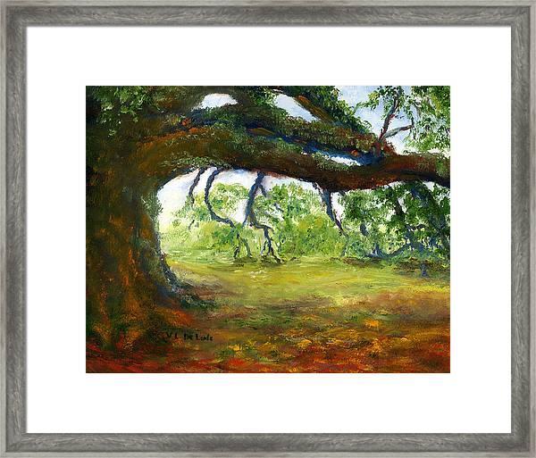 Old Louisiana Plantation Oak Tree Framed Print