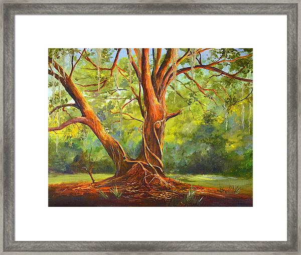 Old Oak With Vines Framed Print