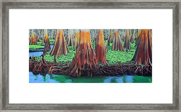Old Swampy Framed Print