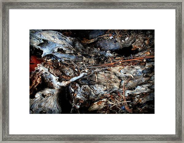 Old Tree Number 1 Framed Print