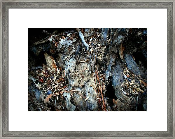 Old Tree Number 2 Framed Print