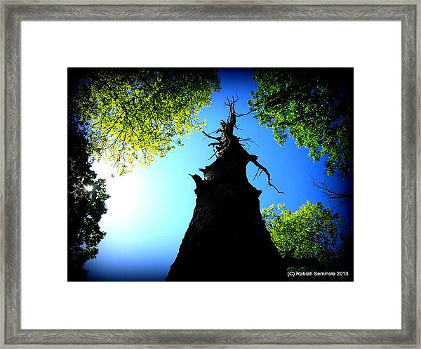 Old Trees Framed Print
