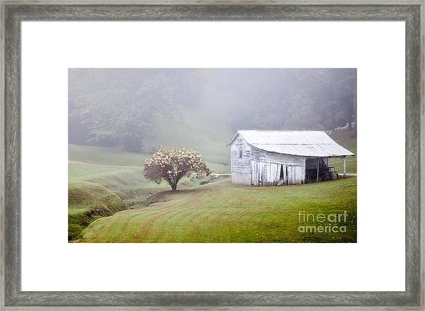 Old Weathered Wooden Barn In Morning Mist Framed Print