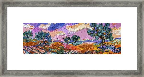 Olive Grooves Provence Panoramic Landscape Framed Print
