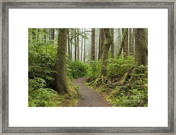 Olympic Park Trail Framed Print