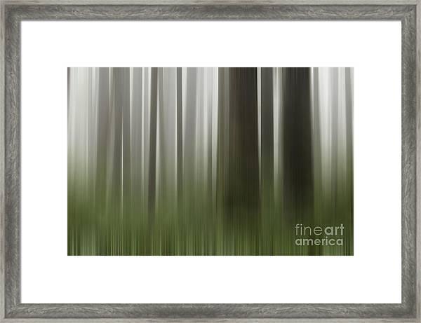 Olympic Trees Framed Print