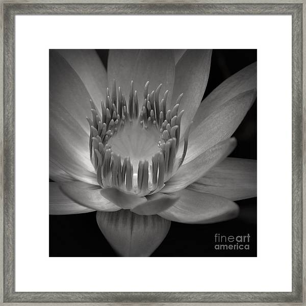 Om Mani Padme Hum Hail To The Jewel In The Lotus Framed Print