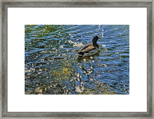 On His Way Framed Print