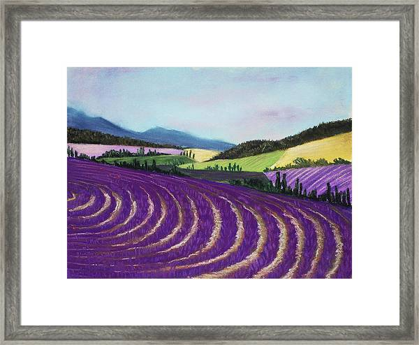 On Lavender Trail Framed Print